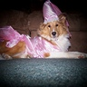 Photo #1 - Pretty Princess Maya