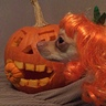 Photo #3 - Princess of Jack O' Lanterns