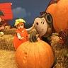 Photo #1 - Pumpkin Baby