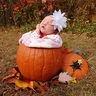 Photo #4 - Pumpkin Baby