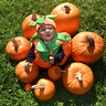 Photo #1 - Hanging with his fellow pumpkins.