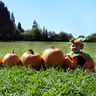 Photo #2 - 10 pumpkins for being 10 months old!