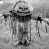 Photo #6 - Pumpkin Patch Scarecrow