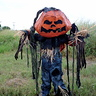 Photo #5 - Pumpkin Patch Scarecrow