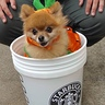 Photo #2 - Pom-kin Spiced Latte!