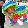 Photo #1 - Puppy Piñata!