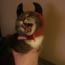 Photo #2 - Purrrfectly Evil Kitty