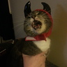 Photo #4 - Purrrfectly Evil Kitty