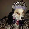 Photo #1 - Queen Sophie Her Royal Highness