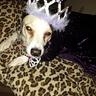 Photo #2 - Queen