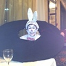 Photo #2 - Rabbit in a Hat