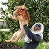 Photo #1 - Rafiki and Simba
