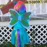 Photo #4 - Rainbow Dash