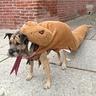 Photo #1 - Concerned Mustached Dog as 10-ft Long Rattlesnake