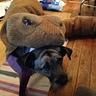 Photo #5 - Rattlesnake Dog