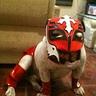 Photo #2 - Rey Mysterio