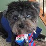 Photo #2 - Riley for President