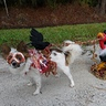 Photo #1 - Roadkill Zombie Dog  full costume seen from left side