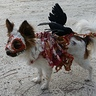 Photo #2 - Roadkill Zombie dog closeup of left side