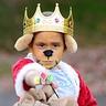 Photo #2 - Prince John