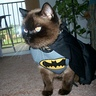 Photo #1 - Bat cat to the rescue!