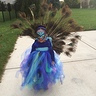 Photo #1 - Runway Peacock