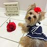 Photo #1 - Sailor Dog