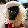 Photo #2 - Front view of Riley Santa Paws