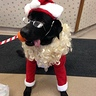 Photo #1 - Riley Santa Paws visiting shelter