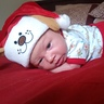 Photo #4 - Santa Puppy