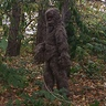 Photo #4 - Sasquatch