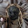 Photo #3 - Scary Scarecrow
