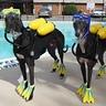 Photo #4 - Scuba Dogs