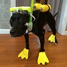 Photo #5 - Scuba Dog