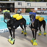 Photo #1 - SCUBA - Self Contained Underwater Breathing Animals