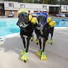 Photo #2 - Scuba Dogs