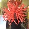 Photo #1 - Sea anemone