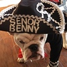 Photo #5 - Senor Benny the Mariachi