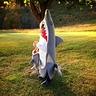 Photo #3 - Shark