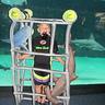 Photo #2 - Shark Diver