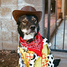 Photo #1 - Woody the Sheriff