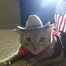 Photo #2 - Sheriff Cat