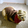 Photo #3 - Sheriff Cat