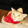 Photo #4 - Sheriff Cat