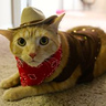 Photo #5 - Sheriff Cat