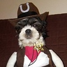 Photo #2 - I'm the new sherriff and making changes for pet policy.