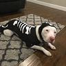 Photo #2 - Skeleton Pitty