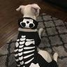 Photo #3 - Skeleton Pitty