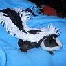 Photo #1 - Skunk