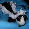 Photo #2 - Skunk